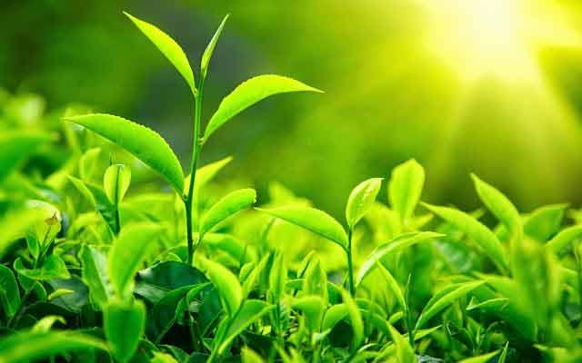 comunicarea plantelor prin telepatie