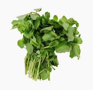 macrisul este o planta vindecatoare cunoscuta si folosita inca din vechime