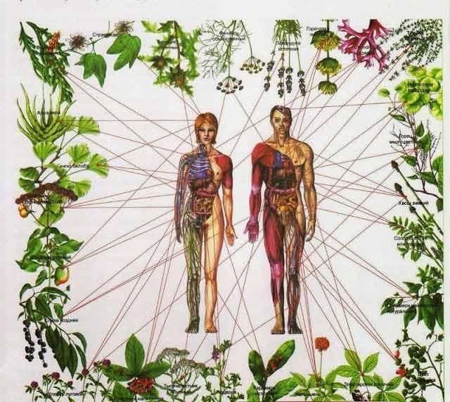 chakrele pot fi purificate si vindecate cu ajutorul plantelor