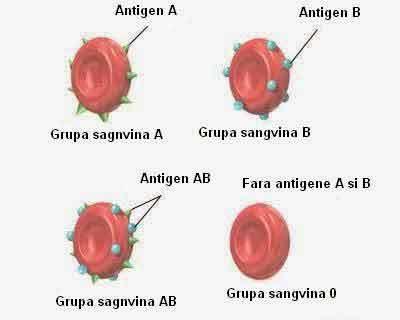 5 lucruri pe care trebuie să le știi despre grupa ta sanguină