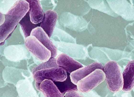 apa folosita pentru cuburile de gheata se poate contamina usor cu bacterii