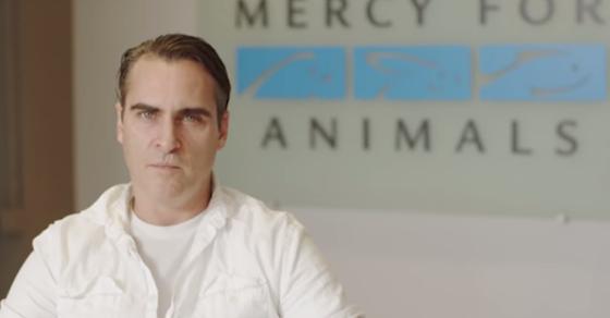 VEZI: Joaquin Phoenix condamnă supermarket-urile pentru sprijinirea dezgustătoare a cruzimii față de porcine