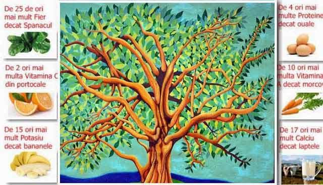 copacul vietii este renumit pentru proprietatile sale vindecatoare