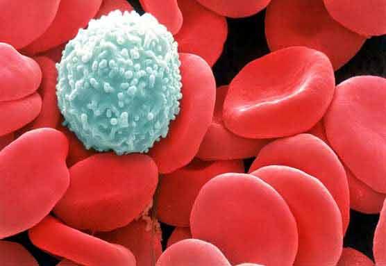 sanatatea organismului depinde foarte mult de starea sistemului imunitar