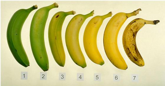 potrivit studiilor, bananele bine coapte sunt mai sanatoase decat bananele verzi