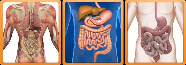 curatarea periodica a colonului este esentiala pentru intarirea sanatatii si imunitatii corpului