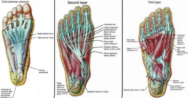 dureri de spate si piciorul drept