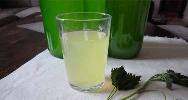 urzica este un excelent mijloc de detoxifiere