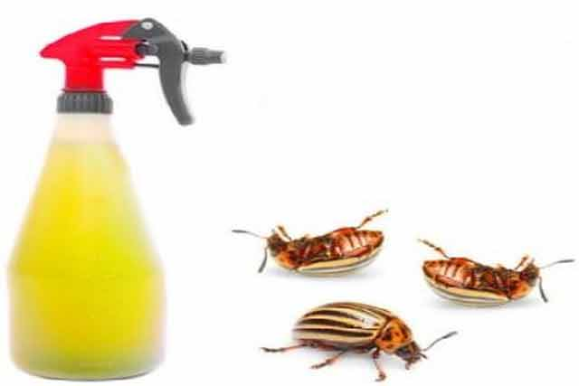 exista solutii naturale simple care pot fi folosite cu succes pe post de insecticid