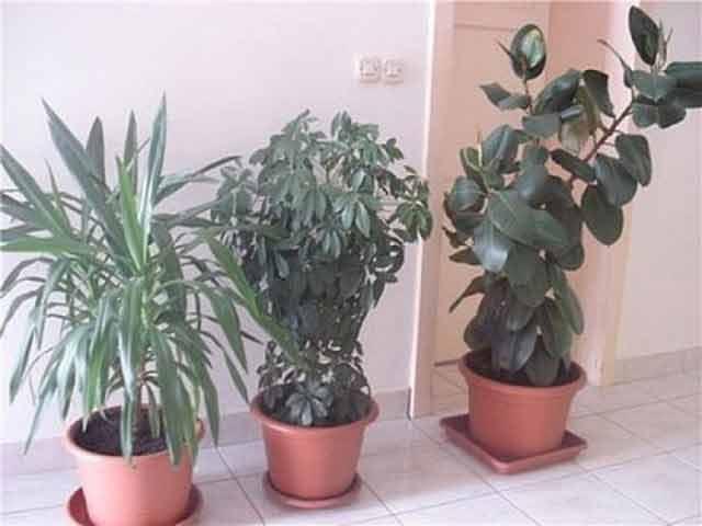 Procură neapărat aceste plante care oferă protecție împotriva radiațiilor, a chimicalelor, și a fumului nociv de țigară
