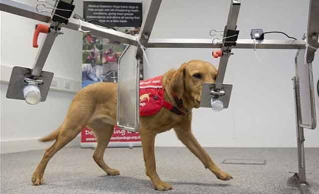 Cel mai bun prieten al omului îți poate salva viața din ghearele cancerului! Câinii detectează cancerul în 9 din 10 cazuri