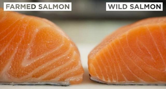 Somonul din fermele piscicole este ticsit cu mercur și antibiotice. Iată cum poți afla dacă somonul cumpărat este sigur pentru consum!