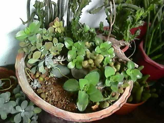 cele mai cunoscute plante pentru purificarea aerului