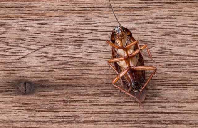 8 metode simple de a scăpa de gândacii din locuință fără chimicale