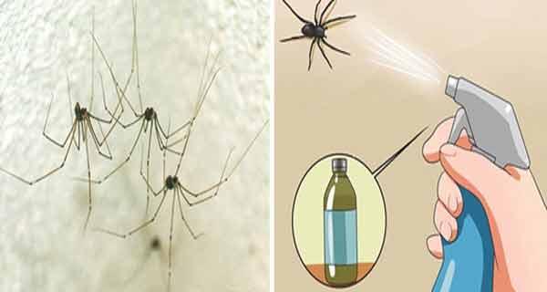 Cum să scapi definitiv de păianjeni în locuință