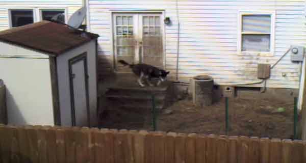 A instalat o cameră îndreptată spre curtea vecinului. Ceea ce a filmat este șocant!