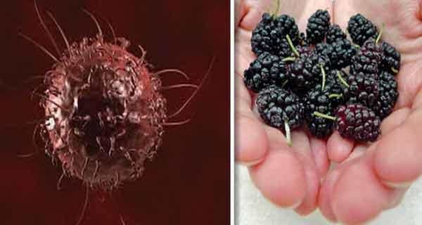 fructul care trateaza tumorile, diabetul si hipertensiunea