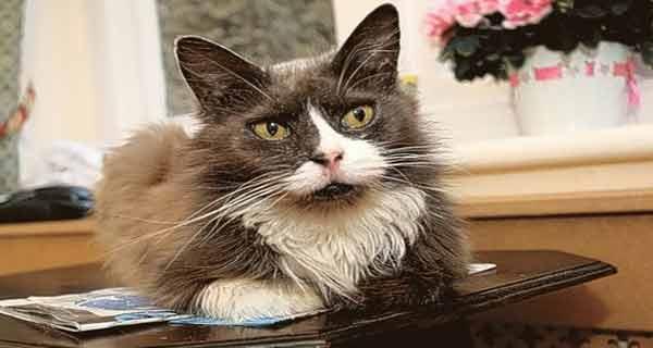 aceasta pisica nu a vrut sa isi paraseasca stapana