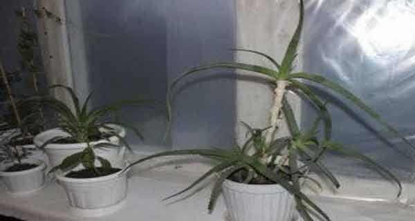 trebuie sa ai in casa aceste sase plante