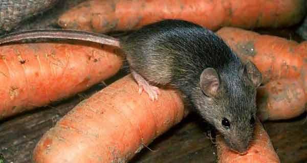 De necrezut! Poți scăpa definitiv de păianjeni și șoareci cu pliculețe de ceai!
