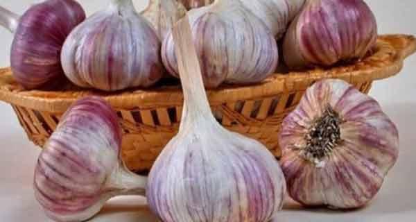 beneficiile usturoiului asupra organismului