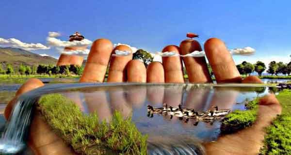 natura este inteligenta comunica