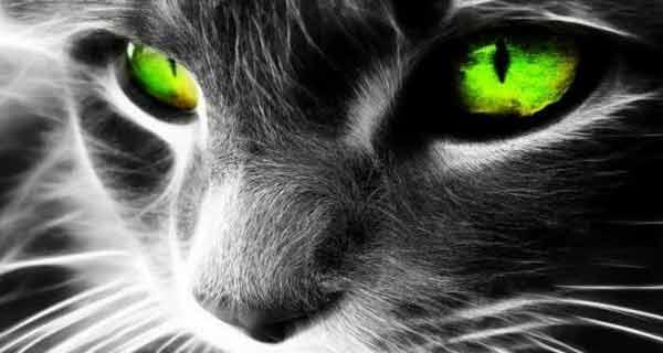 inca din antichitate, pisicile sunt considerate aducatoare de energie pozitiva