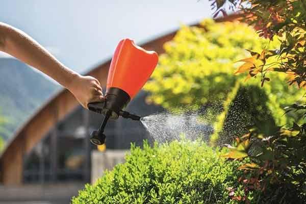 foloseste aceste trucuri pentru plantele din gradina ta