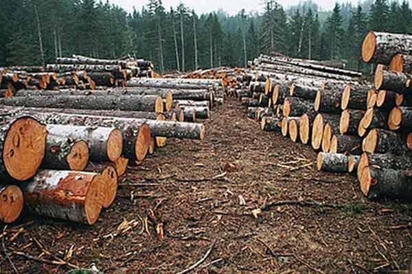 Află aici de ce distrugerea naturii este un păcat !