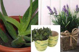 plante care te ajuta sa nu mai sforai si care elimina insomnia