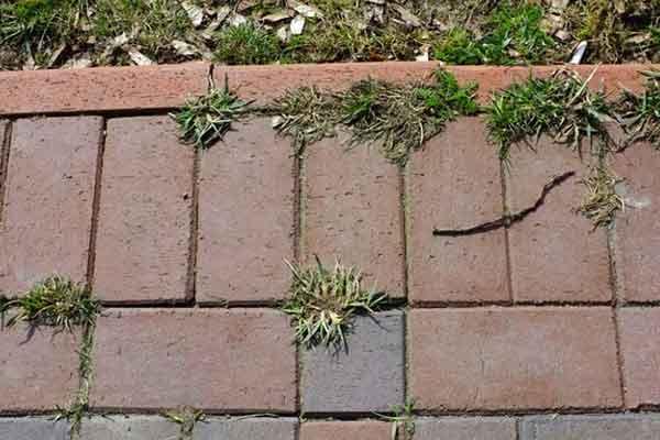 cum sa scapi de plantele nedorite