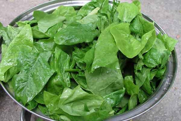 consuma clorofola de la plante pentru a fi sanatos