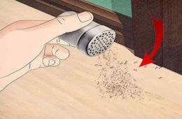 cum scapam de enervantele furnici