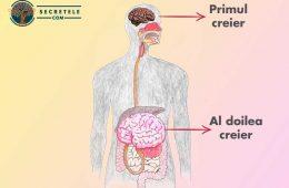 cum sa tratezi al doilea creier