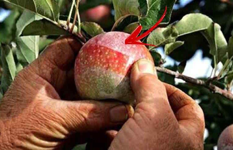cum eliminam pesticdele de pe fructe si legume