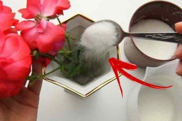 cum sa mentii florile mai proaspete in vaza