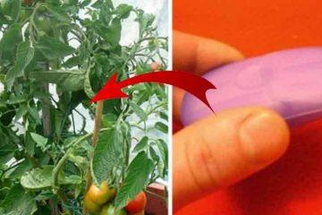 cum scapi de insecte cu sapun
