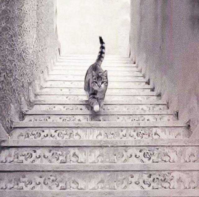 iluzia opica cu pisica