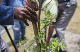 record la plantat copaci in india