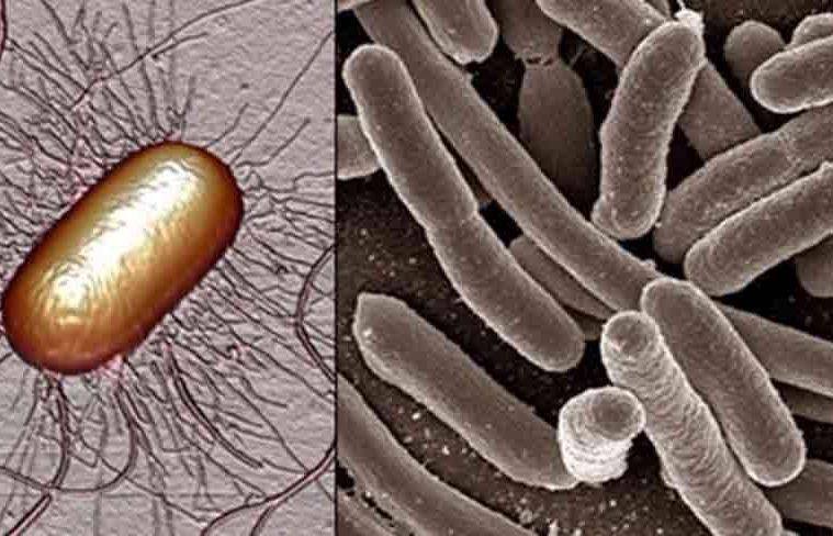 cum scapam de cistita si de infectie urinara fara medicamente