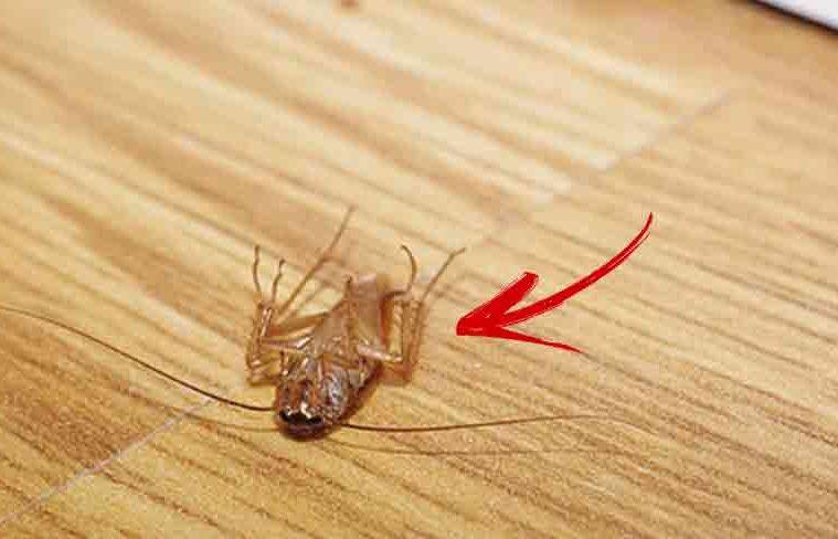elimina insectele