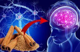 scortisoara este buna pentru creier