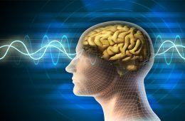 efectele pe care muzica le are asupra organismului uman