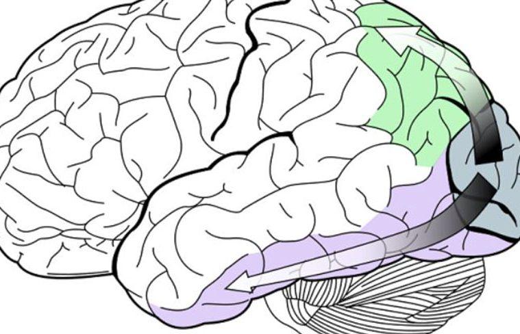 ce se intampla cu creierul noaptea