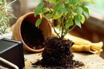 cum sa ne pastram plantele in apartament pe timpul iernii