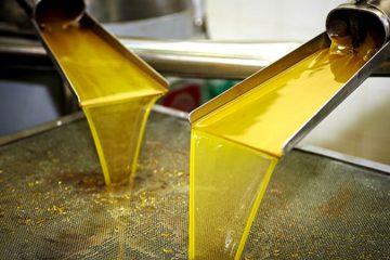 ce este adevarat si ce nu este adevarat despre uleiul de masline