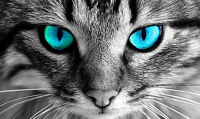 energiile pisicilor in functie de culoare