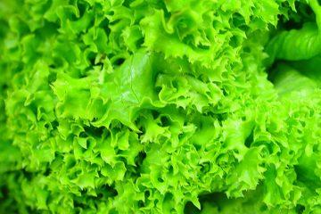 de ce este buna salata verde