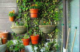 Lucrări plante luna iunie