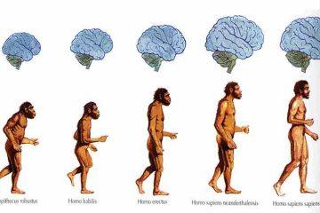 de ce s-a marit dimensiunea creierului